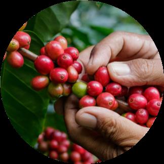 Fairtrade kávék